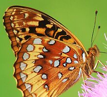 butterfly on thistle by SusieG