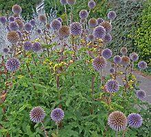 Purple heads by Sandra Caven