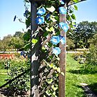Flowers at the Experimental Farm, Ottawa, ON by Shulie1