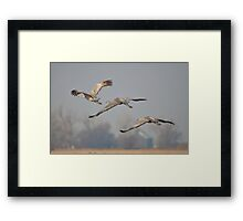 Sandhill Crane Trio Framed Print