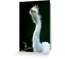 Baby Egret Watching Birds Fly Overhead Greeting Card
