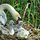 Another family by NVSphoto