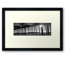 Monkey Puzzles trees Framed Print