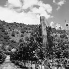 New Mexico Vineyard by Susan Chandler