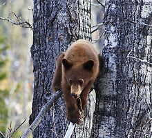 Climbing Down by Alyce Taylor