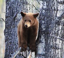 Bear Cub by Alyce Taylor