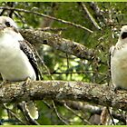 Pair of Laughing Kookaburra's by Burnie