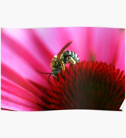 He's The Bee's Knees Poster