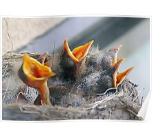 Baby Robins 3 Poster