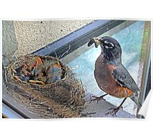 Baby Robins 5 Poster