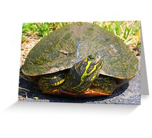 Turtle Smile By Jonathan Green Greeting Card