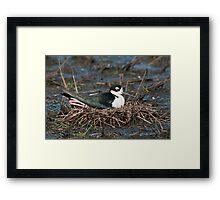 Black-Necked Stilt on Nest Framed Print
