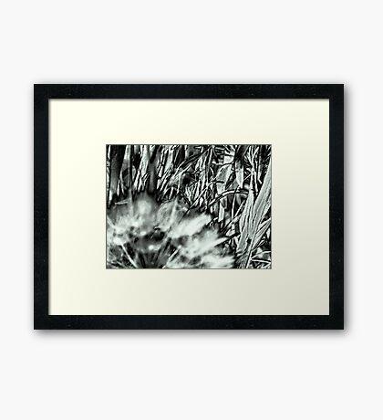 My Weeds & I Love 'Em Framed Print
