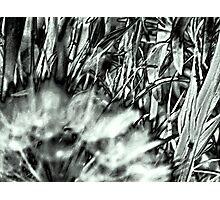 My Weeds & I Love 'Em Photographic Print