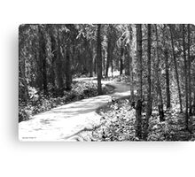 Curves In The Path Canvas Print