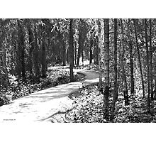 Curves In The Path Photographic Print