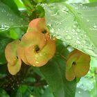 leafy dew by mariatheresa