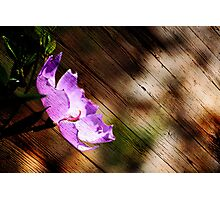WoodFlower Photographic Print