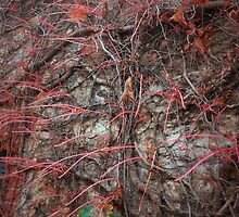 Vines, Hahndorf by Ruth Eckert
