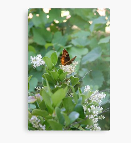 Early Flutter 2 - on the bloom Metal Print