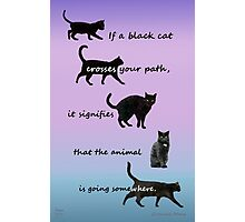 If a black cat  Photographic Print
