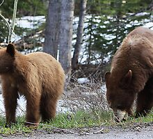 Black Bears by Alyce Taylor