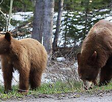 Black Bears by Alyce Taylor
