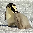 &quot;Feed Me Mum&quot; - Emperor Penguins, Antarctica  by Carole-Anne