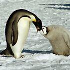 Emperor Penguin Feeding Chick, Antarctica  by Carole-Anne