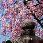 Cherry Blossoms in Kyoto by Margaret Goodwin
