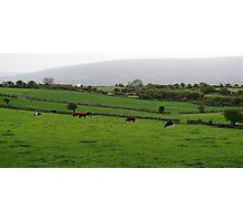 Pasture Photographic Print