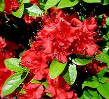 Amazing Azalea  by Debbie Robbins