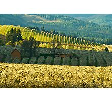 Hood River Valley Oregon Photographic Print
