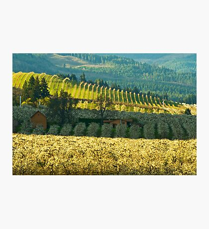 Hood River Valley Oregon Photographic Print