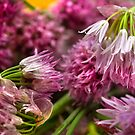 Chives Blooms - From Roof Garden To My Cucina by SmoothBreeze7