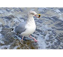 Seafood  Lunch for Gull, Lyme Dorset UK Photographic Print