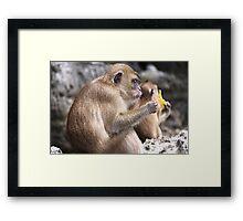 Monkey Island resident Framed Print