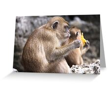Monkey Island resident Greeting Card