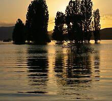 Trees In Water by Vahid Meskoob
