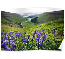 Bluebells near Crackpot Hall, Swaledale Poster
