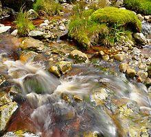 Wicklow Stream by Finbarr Reilly