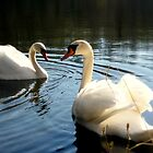 Swans by the Lake by ankitsinghal