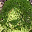 moss slowly growing... by dabadac