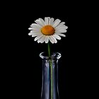 Wild daisy in the vase by picturegallery