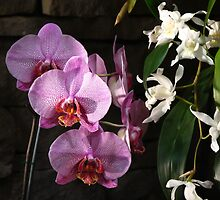 Orchid Spritzer by MarianBendeth