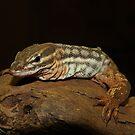 Monitor Lizard by Jason Dymock Photography