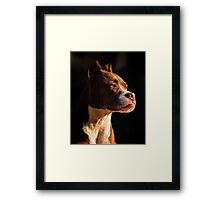 Soaking up the early morning sun Framed Print