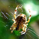 Spiders Web by Trevor Kersley