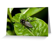 Fly #1 Greeting Card