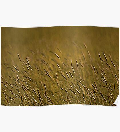 Rye Grass Poster